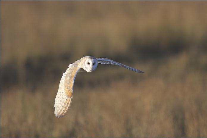 Rewild thing: Building biodiversity 'net gain'